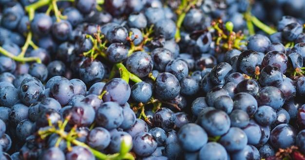Makro ciemnych winogron. selektywne ustawianie ostrości. żniwa. etapy produkcji wina lub szampana.