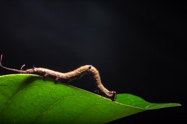 Makro- dżdżownica na roślinie.