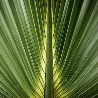 Makro- fotografia zielony tropikalny liść