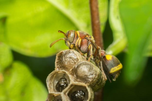 Makro hymenoptera to duża grupa owadów, w tym błonkówki