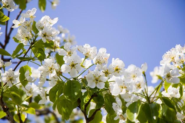 Makro i zbliżenie gałęzi drzewa w okresie wiosennym w gruzji