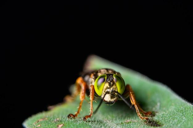 Makro- insekty na liściach w naturze