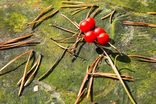 Makro konwalii, convallaria majalis, drzewo czerwone jagody na jednej gałęzi na tle zielonego lasu jesienią. trujące owoce konwalii.