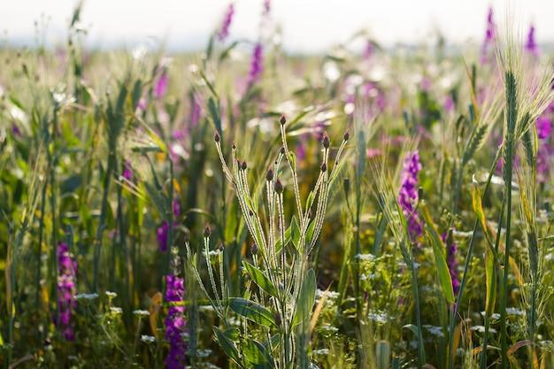 Makro kwiatów i roślin