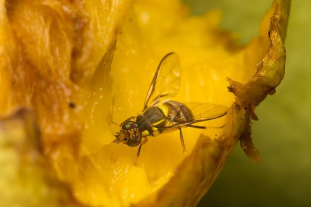 Makro małe owady