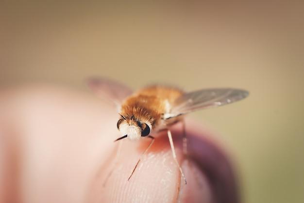 Makro małej muchy