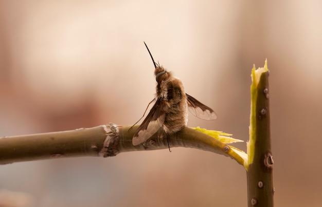 . makro. mucha siedzi okrakiem na złamanej gałęzi