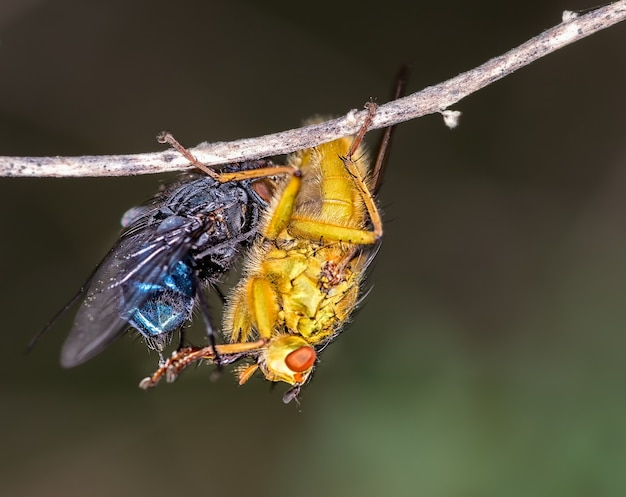 Makro muchy na gałęzi