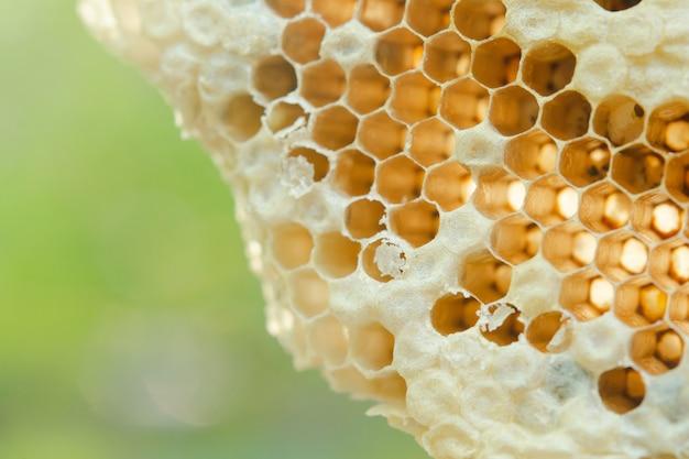 Makro o strukturze plastra miodu, tekstura sześciokąt w tle,
