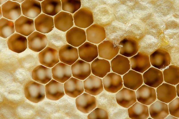 Makro o strukturze plastra miodu