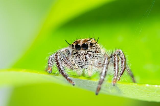 Makro- pająk w natury zieleni tle
