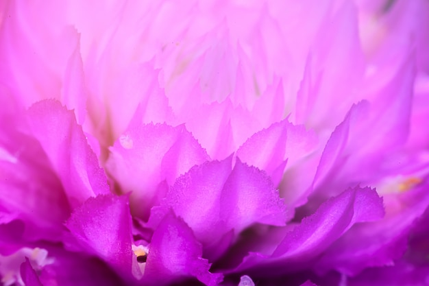 Makro- purpurowy owocowy kwiat w ogródzie