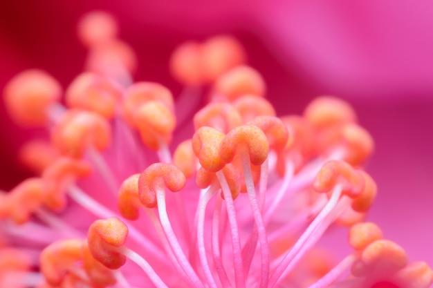 Makro- różowy owocowy kwiat w ogródzie