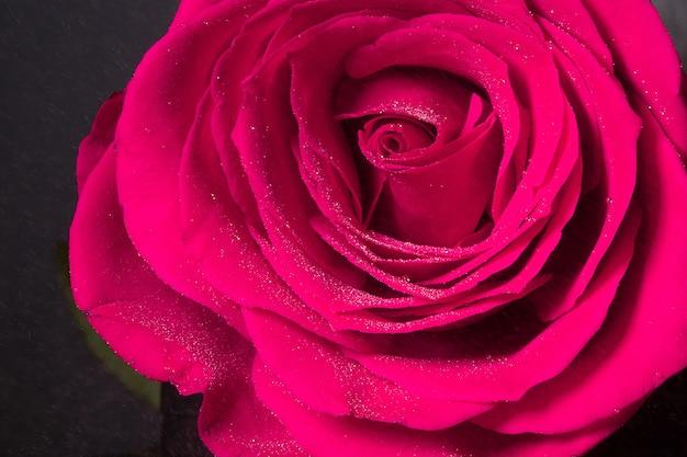Makro strza? u o frose p? atek kwiatu z kropelek wody, streszczenie kwiatów t? a.