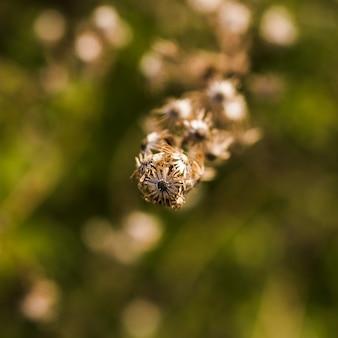Makro- strzał sucha roślina