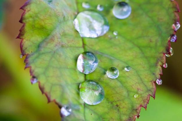 Makro- strzał wody kropla na zielonym liściu
