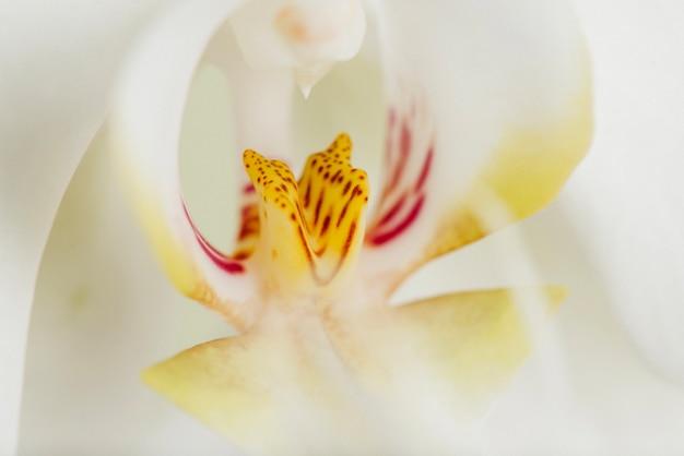 Makro strzał z rdzenia kwiatu