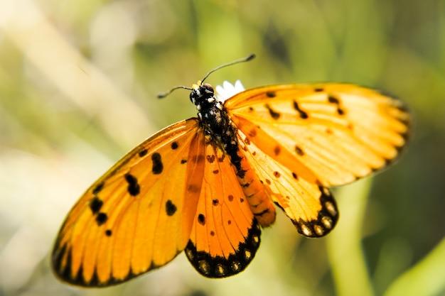 Makro strzał żółty motyl