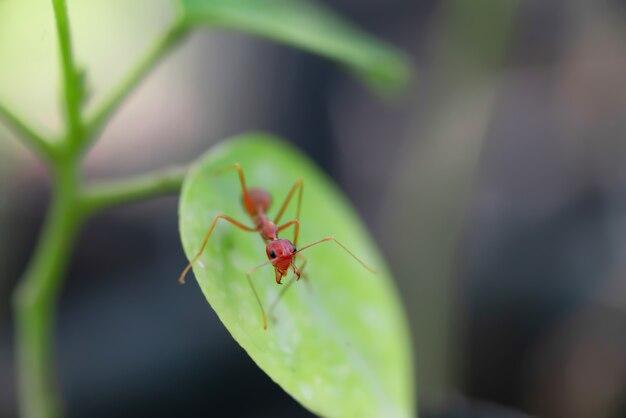 Makro- strzału fotografia mrówka na drzewie