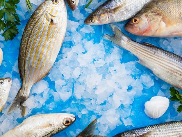 Makro świeże ryby z kostkami lodu