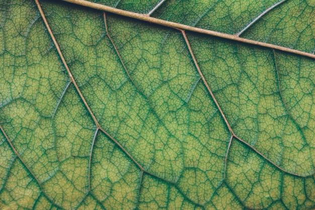 Makro- tekstura zielony liścia zakończenie up