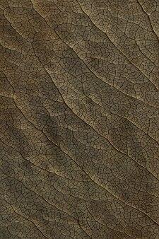 Makro tekstury suchych roślin liściastych na powierzchnię. płaskie detale zielnika.