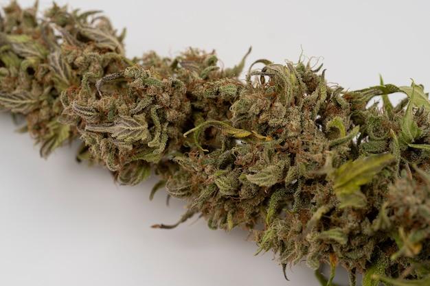 Makro widok suszenia kwiatu marihuany ekstremalne zbliżenie rośliny konopimedyczna marihuana