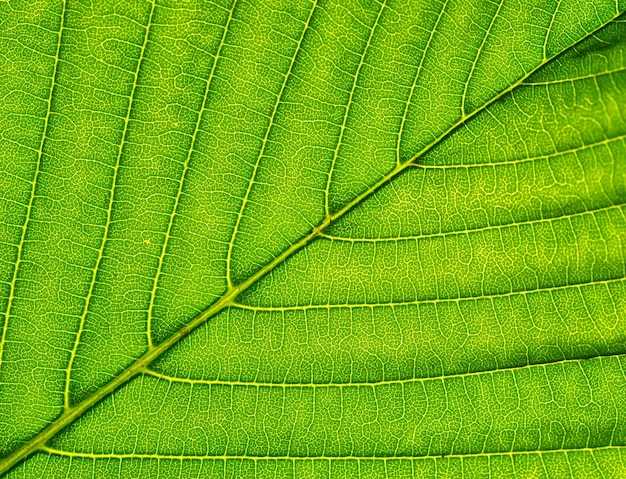 Makro z zielonych liści.