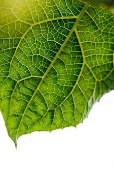 Makro z zielonych liści