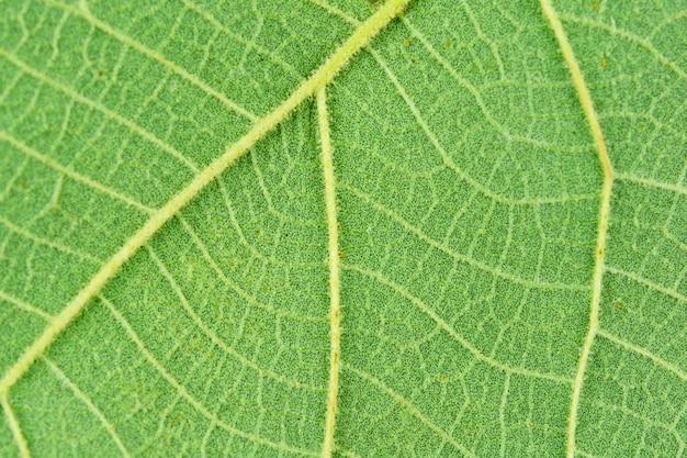 Makro- zakończenie zieleni liścia tekstury tło