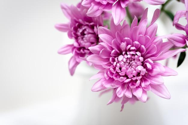 Makro zdjęcie tętniącego życiem kwiatów w wazonie na białym tle