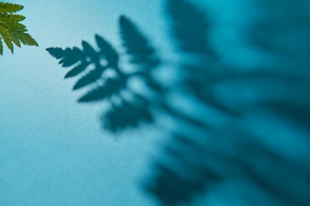 Makro zielony liść paproci z cienia wzór
