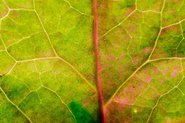 Makro zielony liść