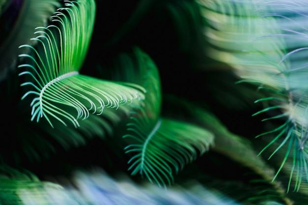 Makro zielonych liści tropikalnych