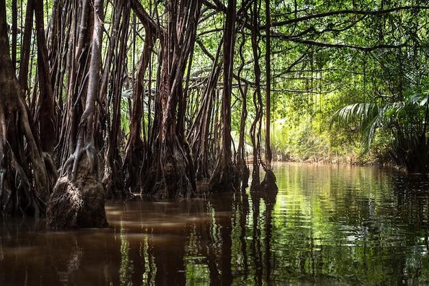 Mała amazonka w pang-nga w tajlandii sang nae canal