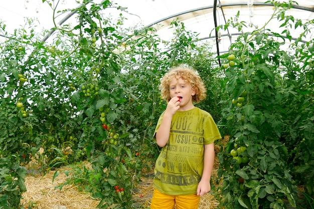Mała blond chłopiec zrywania pomidory w ogródzie