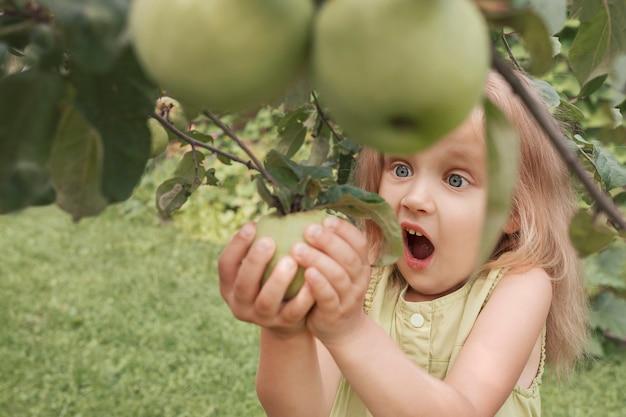 Mała blondynka w zielonej sukience z podziwem na twarzy zrywa jabłko z drzewa