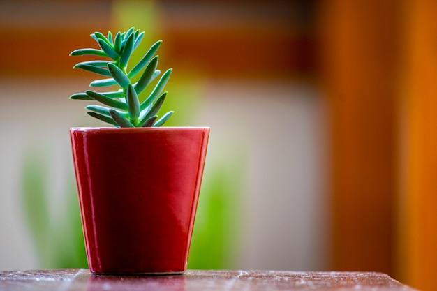Mała czerwona doniczka z zieloną rośliną strączkową i rozmytym tłem