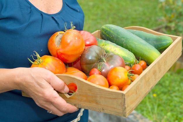 Mała drewniana skrzynia z warzywami z ogrodu