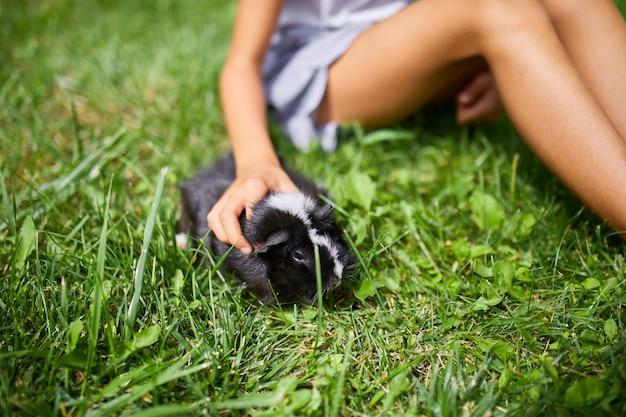 Mała dziewczynka bawi się czarną świnką morską siedzącą na zewnątrz latem, świnka morska perkal pasie się na trawie na podwórku swojego właściciela