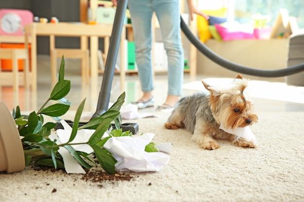 Mała dziewczynka czyści dywan bałaganiony przez psa