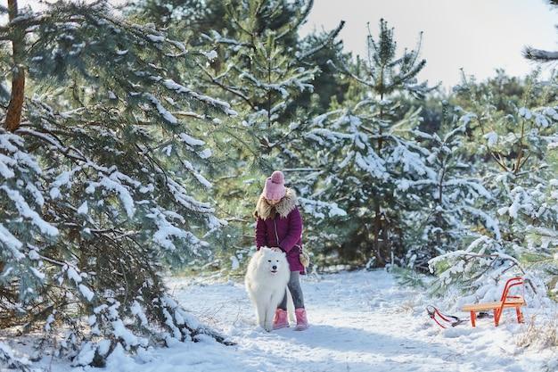 Mała dziewczynka i jej pies w zaśnieżonym lesie. mała dziewczynka z saniami i psem samoyedem