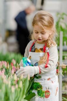 Mała dziewczynka kropi tulipany wodne w szklarni na wiosnę.