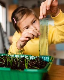 Mała dziewczynka mierzy kiełki rosnące w domu