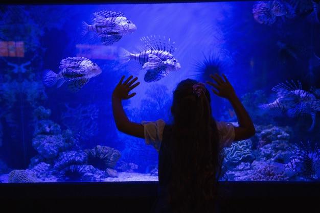 Mała dziewczynka patrzeje akwarium w akwarium