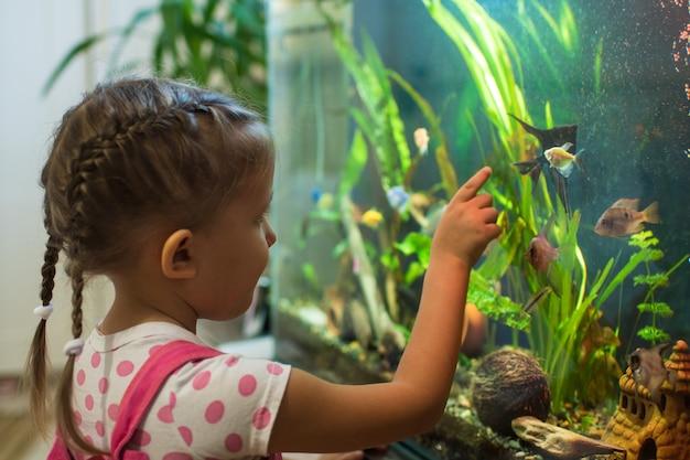 Mała dziewczynka patrzy na skalary ryb w akwarium