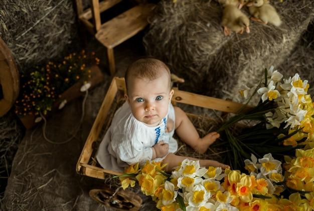 Mała dziewczynka rasy białej o niebieskich oczach w białej lnianej sukience siedzi w drewnianym wózku na tle siana z kaczuszkami. dzieci obchodów wielkanocy