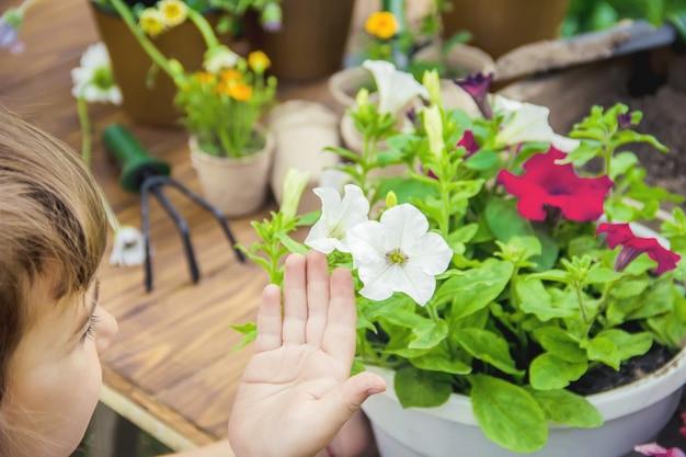 Mała dziewczynka sadzi kwiaty. młody ogrodnik. selektywne skupienie.