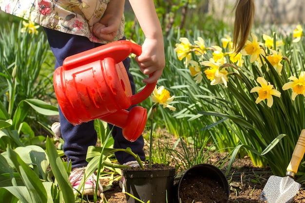 Mała dziewczynka sadzi kwiaty w ogrodzie, dzień ziemi. dziecko pomaga w gospodarstwie.
