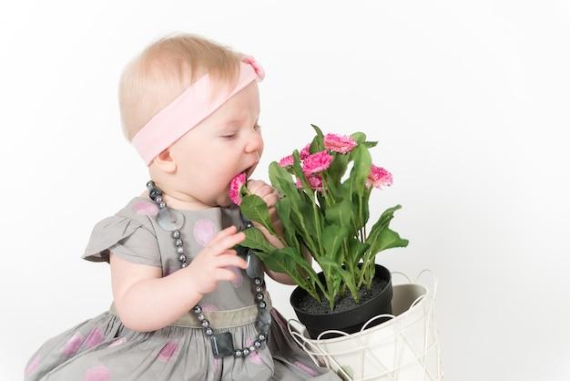 Mała dziewczynka w szarej sukience bawi się kwiatami i je je na białej przestrzeni